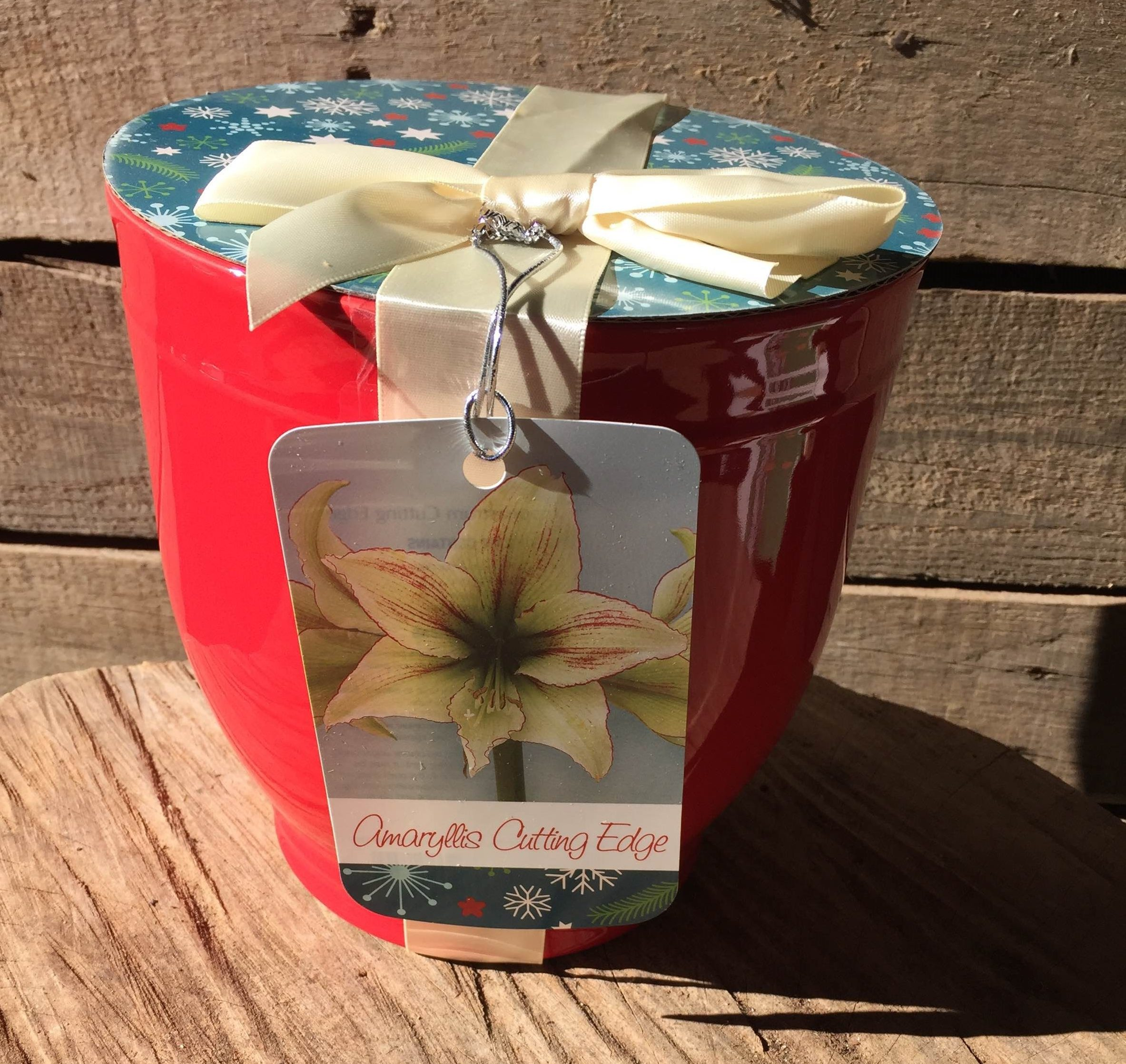 An amaryllis grow kit from our online plant nursery, an online nursery for amaryllis grow kits, tulip bulb mix, citronella plants, paperwhite bulb mix, pink muhly grass, horseradish root and more!