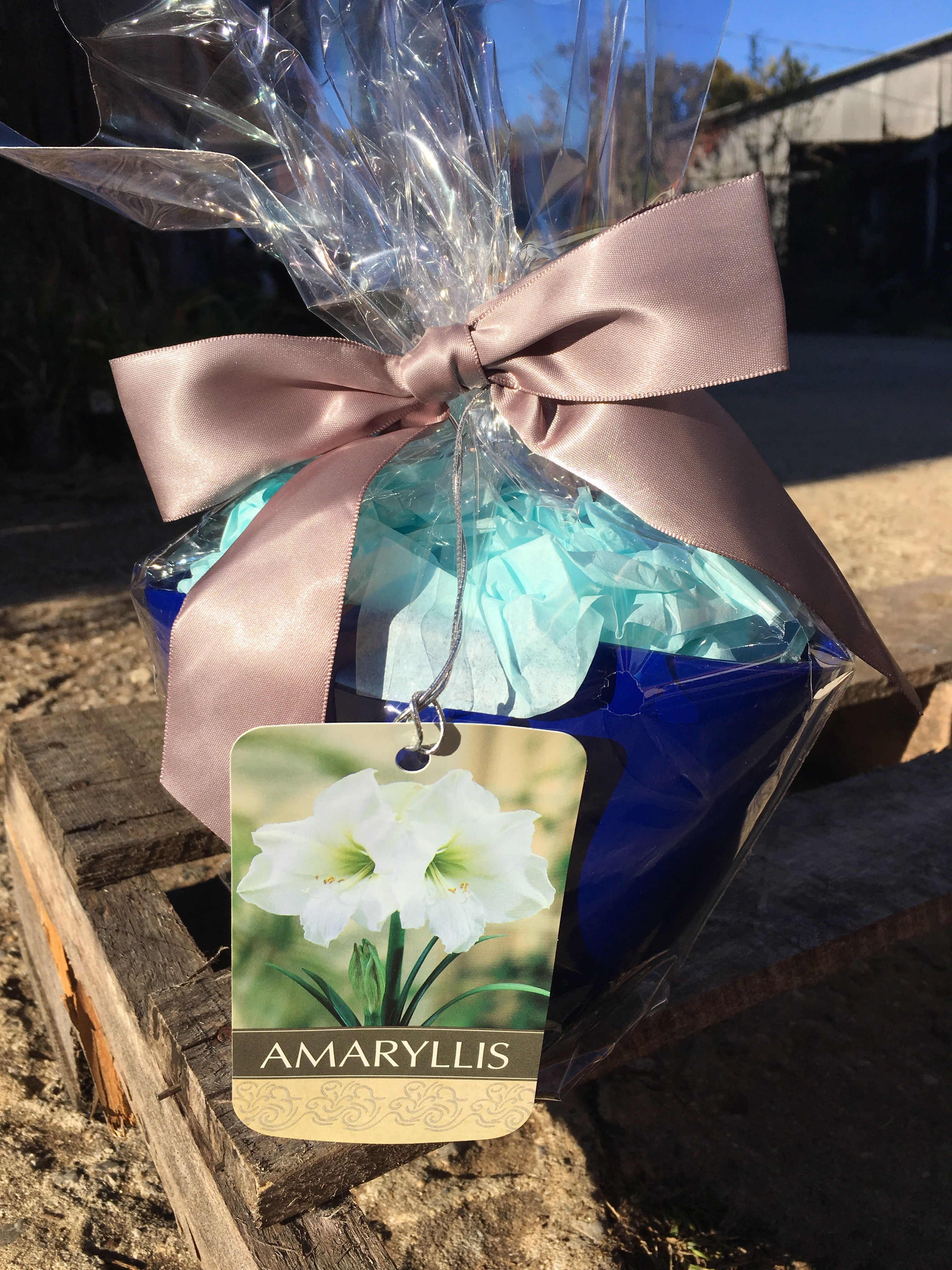 Amaryllis grow kit from our online nursery, an online plant nursery for amaryllis grow kits, citronella plants, tulip bulb mix, paperwhite bulb mix, fast growing trees and more!
